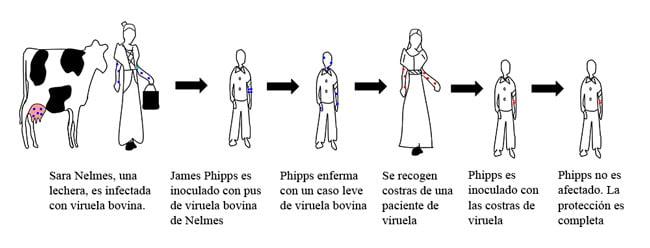 proceso jenner vacuna